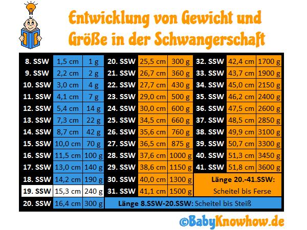 19. SSW Größe & Gewichtszunahme