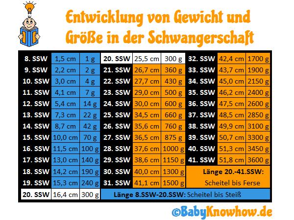 20. SSW: Größe & Gewichtszunahme