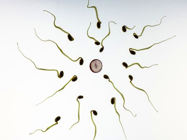 Schwanger trotz Regelblutung